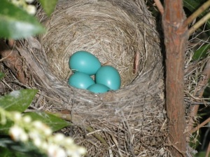 What colour is Robin's egg blue???