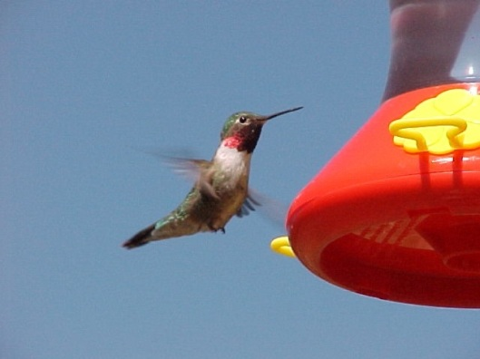 Hummer in Wyoming