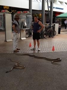 Darwin locals