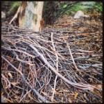 Pile of big sticks