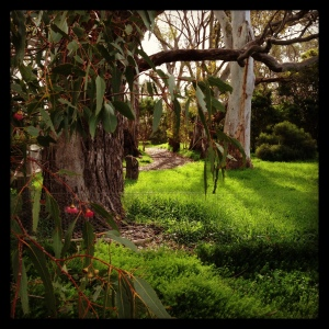 Give me a home among the gum trees...