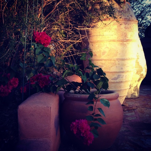 Evening sun on pots and bougainvillea