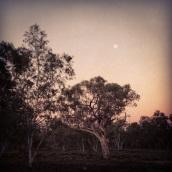Early morning moon along the river walk