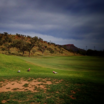 galahs on the fairway