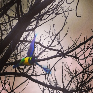 bird of paradise??
