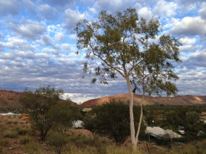 landscape-macdonnellranges-alicesprings.jpg