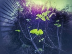 fig-tree-spring