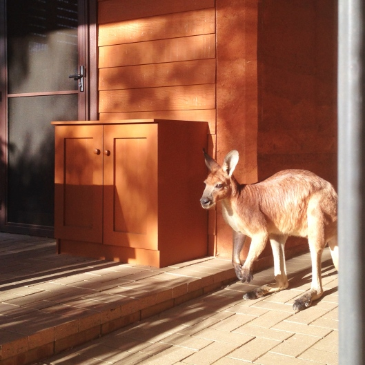 Using our breezeway as a thoroughfare.