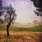 rain-alice-springs