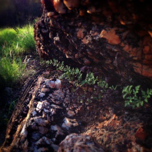 ferns-rocks-desert