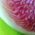 fig-macro