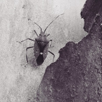 (6) insect