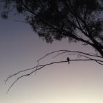 (23) simplicity at dawn