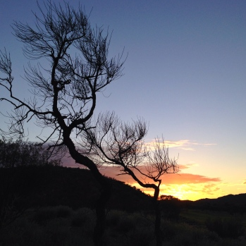 (25) desert oak at sunrise