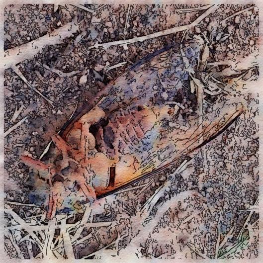 golden-drummer-cicada-deceased
