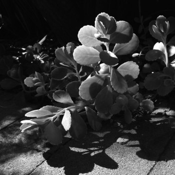 early morning light in courtyard