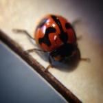 lady bug IMK!
