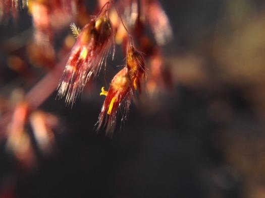 Grass seed heads.