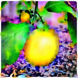 waterlogue-lemon