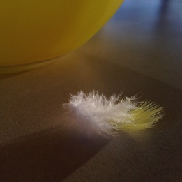 feather-yellow-white