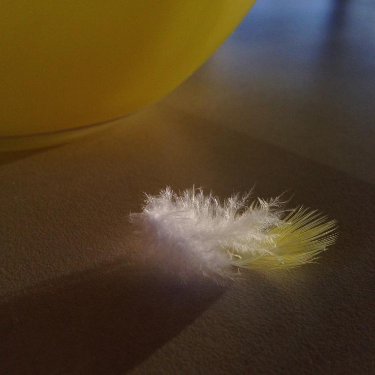 feather-yellow-white