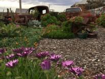 Garden in front of café. Silverton