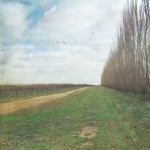 Vineyard in winter, SA