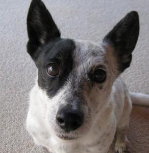 amos-the-magic-dog