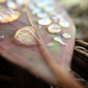 gum leaf with sliver cabochon droplets of moisture