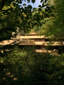 Fallingwater through the foliage of surrounding woods