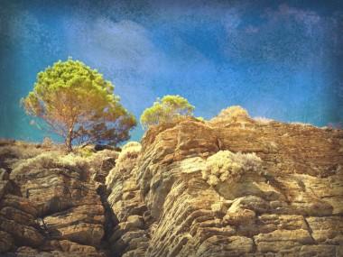 Lonely tree along rocky coast in South Australia