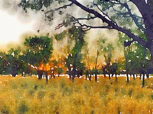 Landscape on Alice Springs Golf course edited in Waterlogue