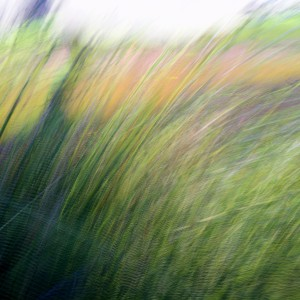 Grass reverie...