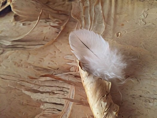 Feather on paperbark