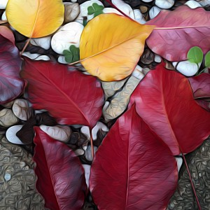 Autumn leaves in Adelaide