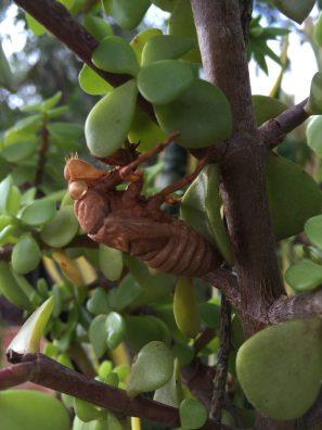 vestiges of a cicada summer