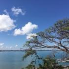 Darwin through the Poinciana trees
