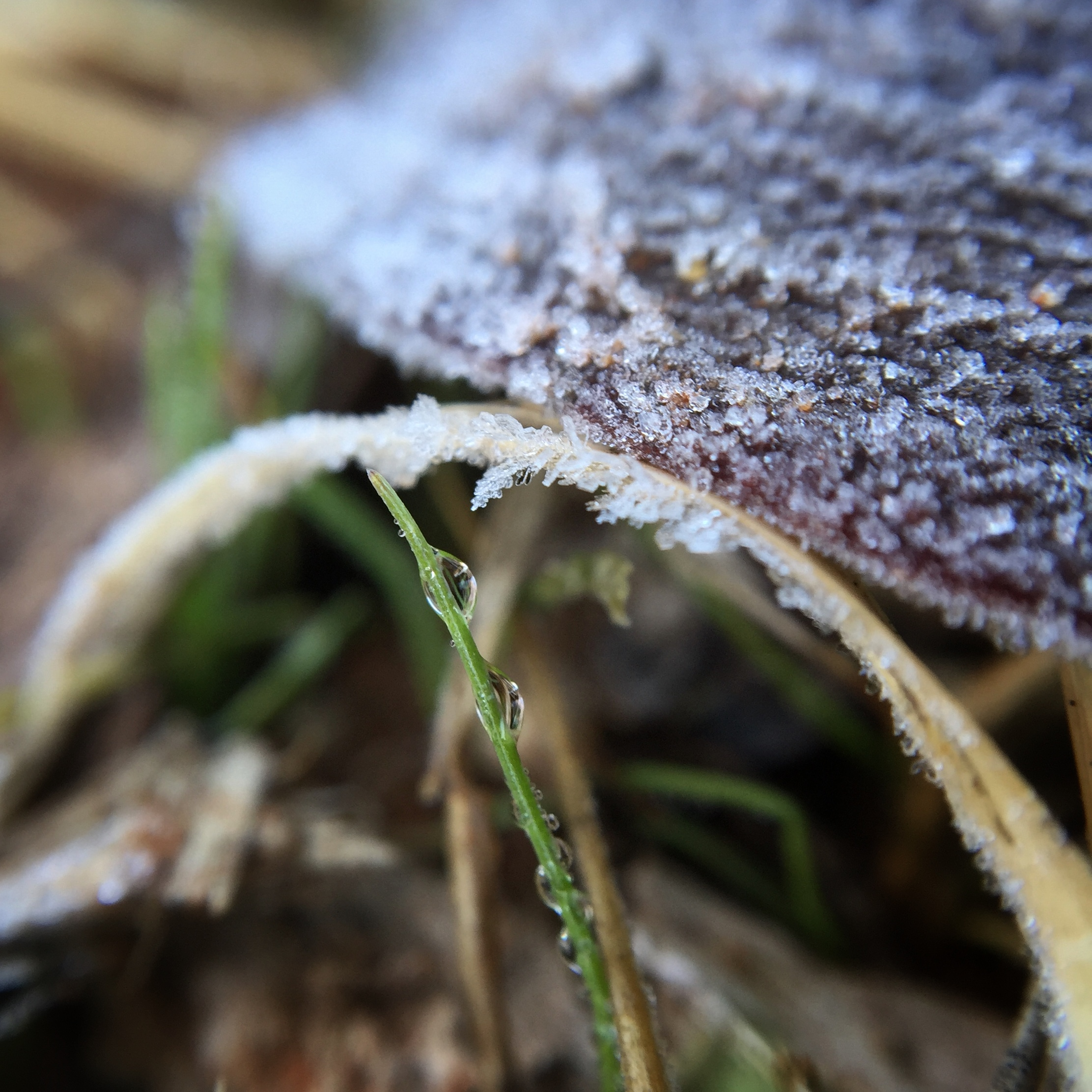 frost-droplet-grass