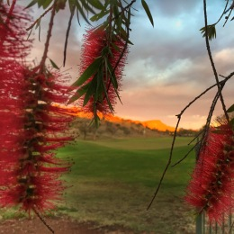 Looking through the Callistemon flowers at sunrise on Mt Gillen...from our patio.