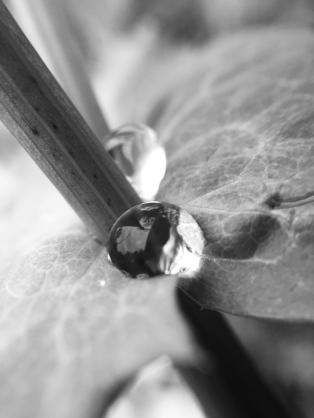 Captive rain droplet.