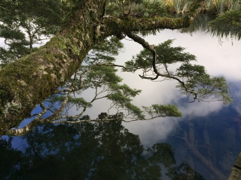 Reflections in mirror lake on the way to Milford Sound