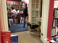 Even the canines of Hay enjoy a good book store!